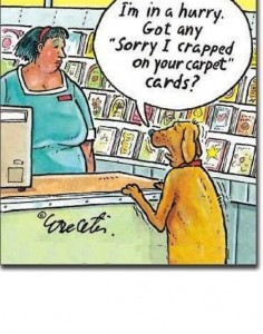 Carpet Jokes: Dog looking for a card that says sorry I crapped on your carpet