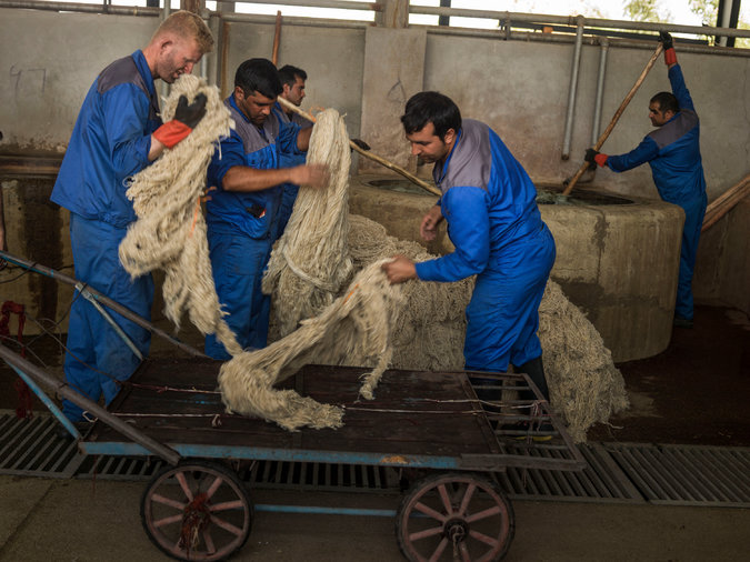 workers coloring wool